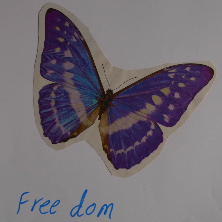 A collage of a butterfly with the word 'freedom'